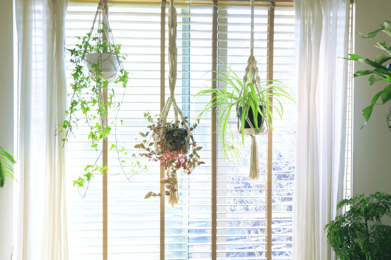 Hanging Plants in Window